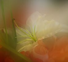 Heart & Soul in Flowers by enchantedImages
