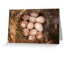 Chickadee Nest! Almost a Dozen Eggs! Greeting Card