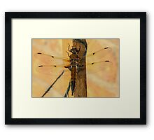 Dragonfly and Green Twine Framed Print