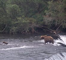 MOTHER BROWN BEAR AND CUB WADING IN BROOKS RIVER ALASKA by Wayne Hughes