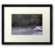MOTHER BROWN BEAR AND CUB WADING IN BROOKS RIVER ALASKA Framed Print
