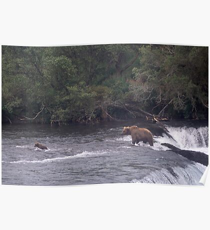 MOTHER BROWN BEAR AND CUB WADING IN BROOKS RIVER ALASKA Poster