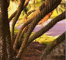 Through short palms by Bigart32