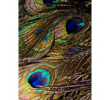 Composition in Peacock Feathers Photographic Print