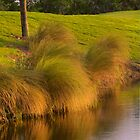 Long grass at 17th hole on Deering Bay golf course in South Florida by Bigart32