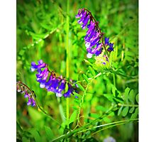 Early Wildflowers Photographic Print