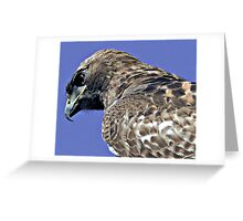 Red Tailed Hawk Close Up Greeting Card