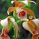 Orchid #12 by robert murray
