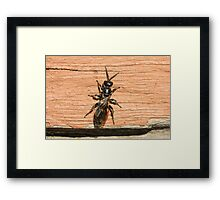 Insect and Table 3 Framed Print