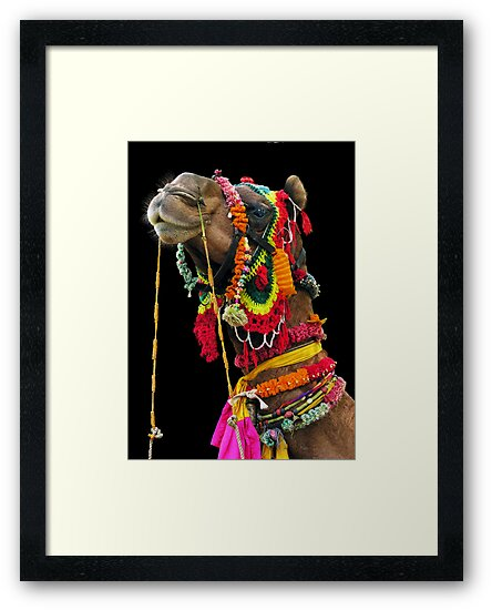 TECHNICOLOR CAMEL - RAJASTHAN by Michael Sheridan