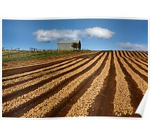 The Onion field - Sheffield Tasmania Poster