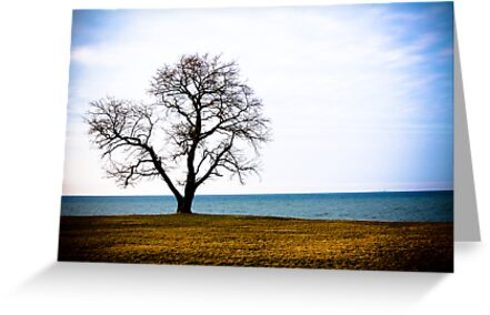 The Lonely Tree by Dylan Hamm