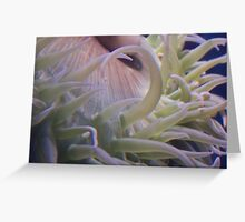 Sea Sprouts Greeting Card