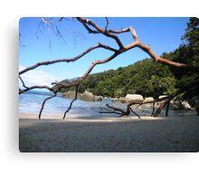 Bark Bay Beach, Abel Tasman National Park Canvas Print