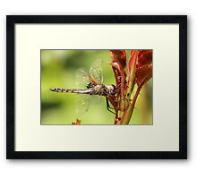 Dragonfly and Red Plant Framed Print