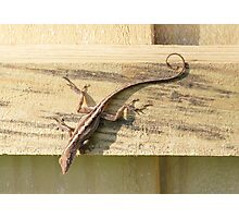 not another lizard? Photographic Print