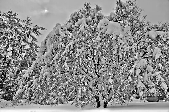 Winter Storm 2010 by Jaime Martorano