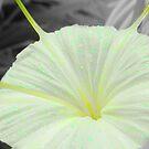 SC Flower Drops by PhoenixArt