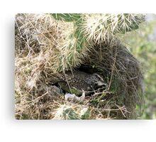 Cactus Wren ~ Nesting Female Canvas Print