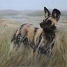 African Wild Dog by Tom Godfrey
