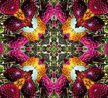 Kurious Kaleido 2 by Matthew Walmsley-Sims