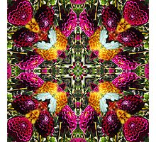 Kurious Kaleido 2 Photographic Print