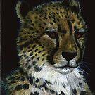 Cheetah by Jedro
