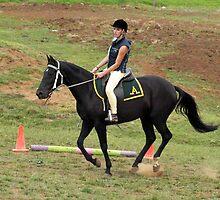 Stock Horse working at Lardner Park, Warragul, Vic by Bev Pascoe