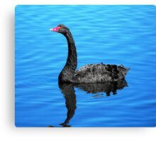 Black Swan on the Pond Canvas Print