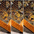 A new queen hatches by Mark Bangert