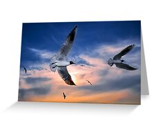 Black-Headed Gulls at Sunset Greeting Card