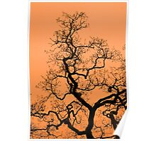 Sunsets and Trees Poster