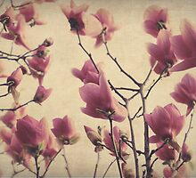 Spring Flowers Fading by Parapulse