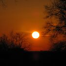Full Sun Before Going Down by Linda Miller Gesualdo