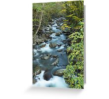 West Prong Little Pigeon River  Greeting Card