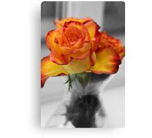 anniversary rose Canvas Print