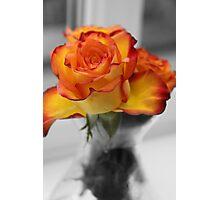 anniversary rose Photographic Print