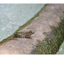 Frog Log Photographic Print