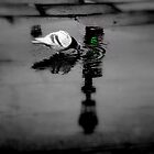 Traffic Light by Mojca Savicki