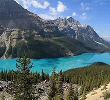 Peyto Lake, Banff National Park by Teresa Zieba