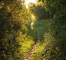 Nature's Path by Mike Sonnenberg