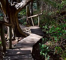Rainforest Boardwalk with Steps by Stacey Lynn Payne