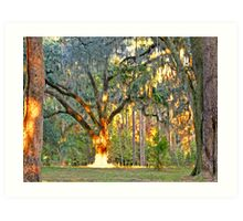 07-136 - Queen of the Oaks with the sun as her crown Art Print