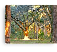 07-136 - Queen of the Oaks with the sun as her crown Canvas Print