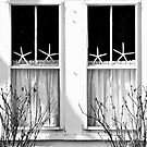 Window Stars... by Karen  Helgesen