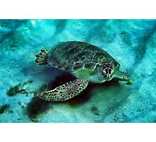 Friendly Sea Turtle Photographic Print