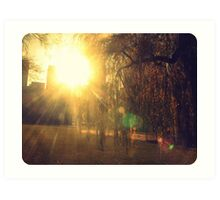 sunflare through the trees Art Print