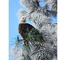 A frosty raptor morning Photographic Print