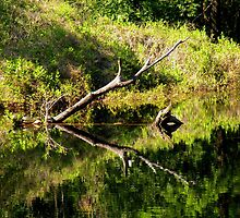 Reflections on the Natural Pond by Rosalie Scanlon