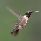 Ruby-Throated Hummingbird by Teresa Zieba